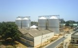 Bulgaria considers grain imports to counter soaring domestic prices